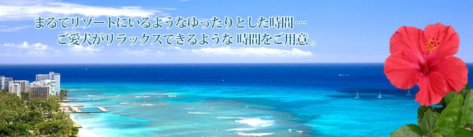 福岡発/安心安全なペットフード&グッズ通販/h-Dolce
